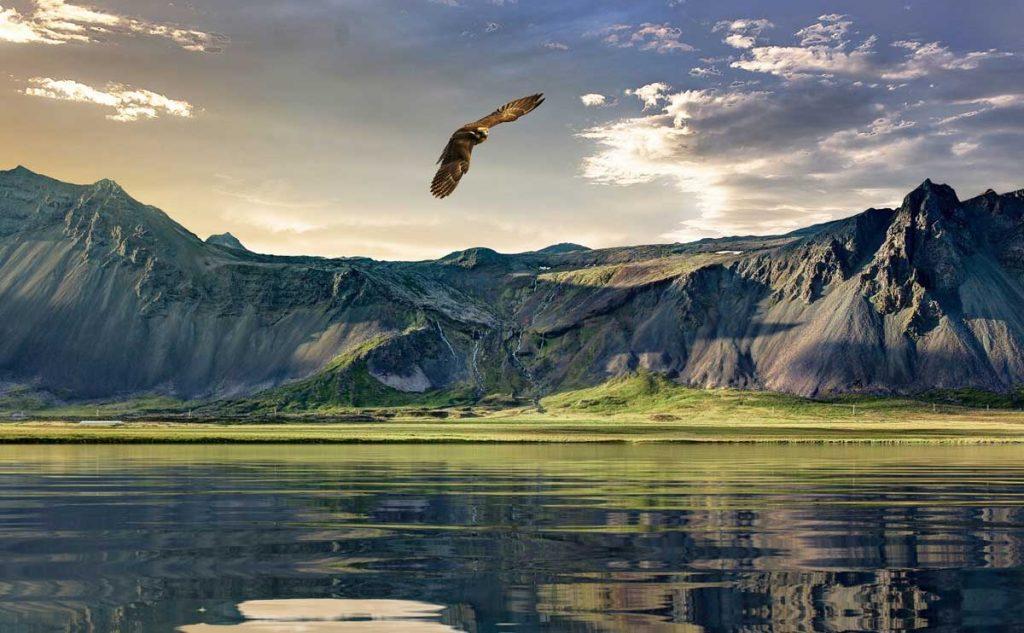 Adler oder Maulwurf? Du hast die Wahl!