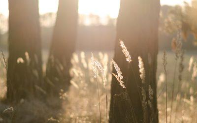 6. – 10. September 2020: FIND YOUR ESSENCE – Schreiben, Yoga und Natur in Götzis/Arbogast