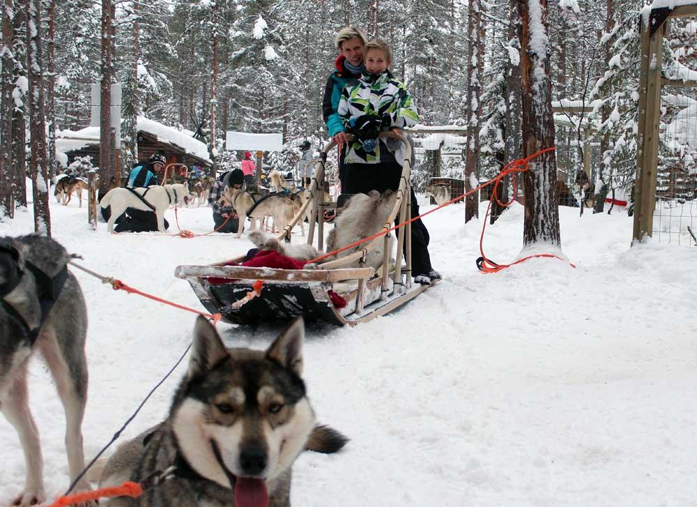Schlittenhundefahrt in Finnland