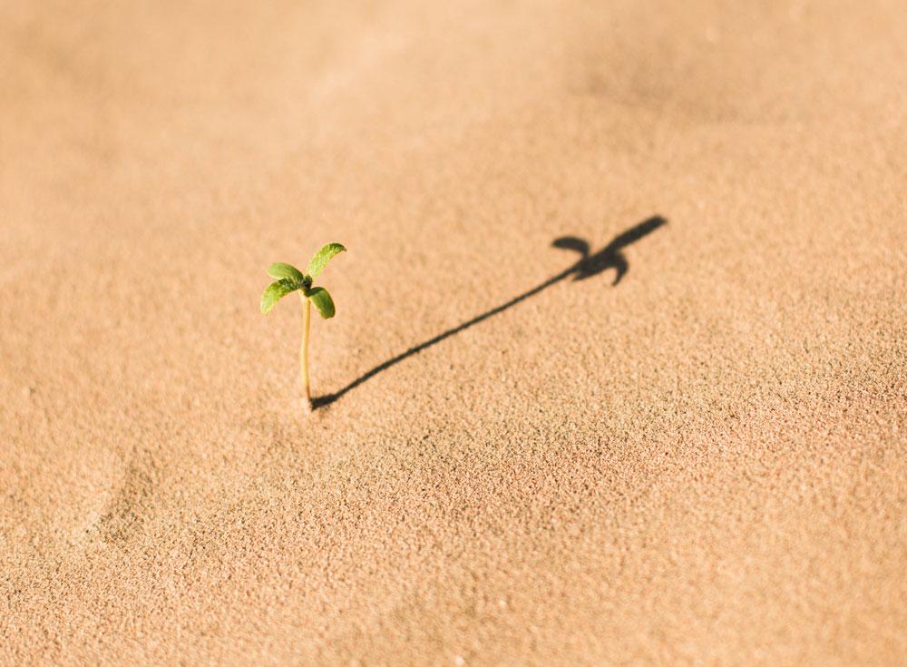 Beziehungen sind zarte Pflanzen, die Pflege brauchen