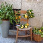 Bewegte Schreibreise auf Mallorca